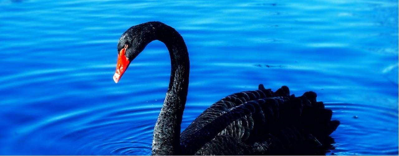 ATREVIA-Cisne-negro